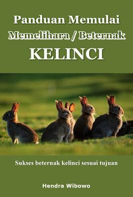 panduan cara ternak kelinci