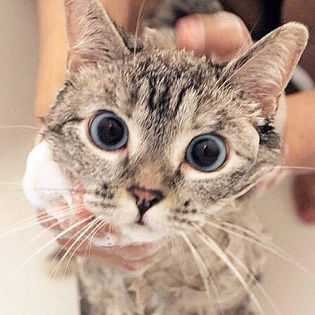 Memandikan Kucing