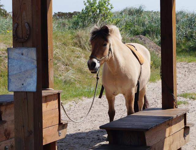 Blavand Zoo Pony reiten