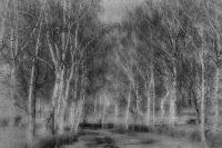 Der Birkenweg