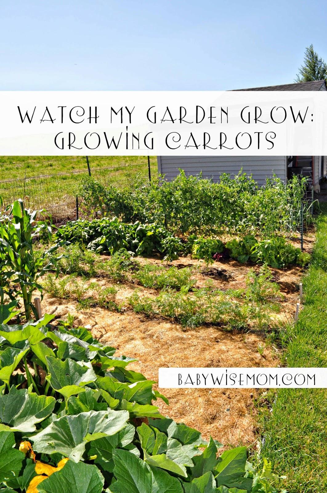 Growing Carrots {Watch My Garden Grow Series}