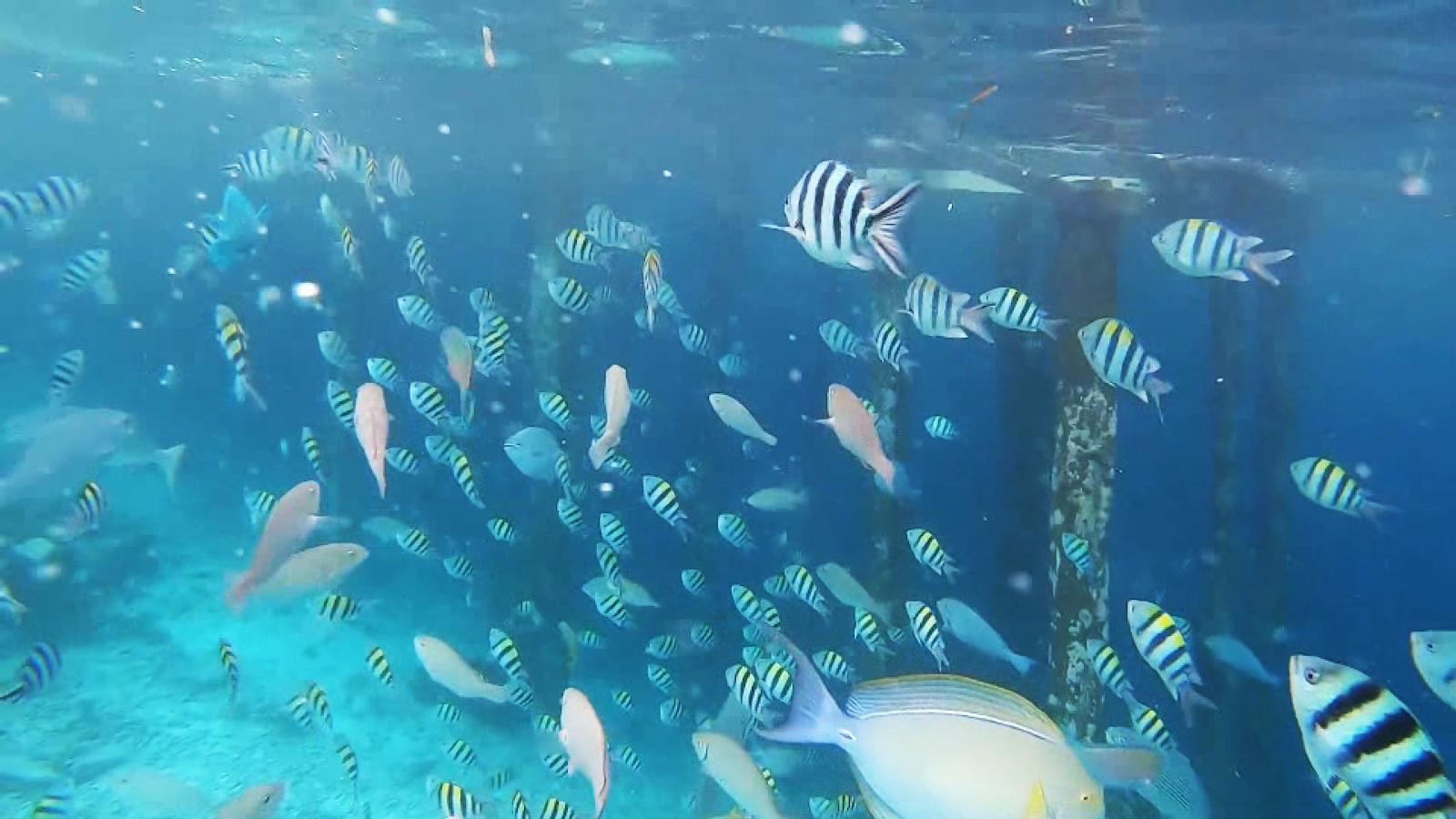 biota laut raja ampat