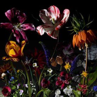Натюрморты с цветами. Bas Meeuws. Часть 2 (фотограф)