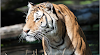 Plan a trip to Jim Corbett National Park for tigers and safari