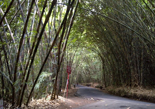 http://www.teluklove.com/2017/02/destinasti-objek-wisata-hutan-bambu-di.html