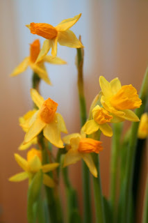Focus on life: The beauty of flowers: The daffodils :: All Pretty Things