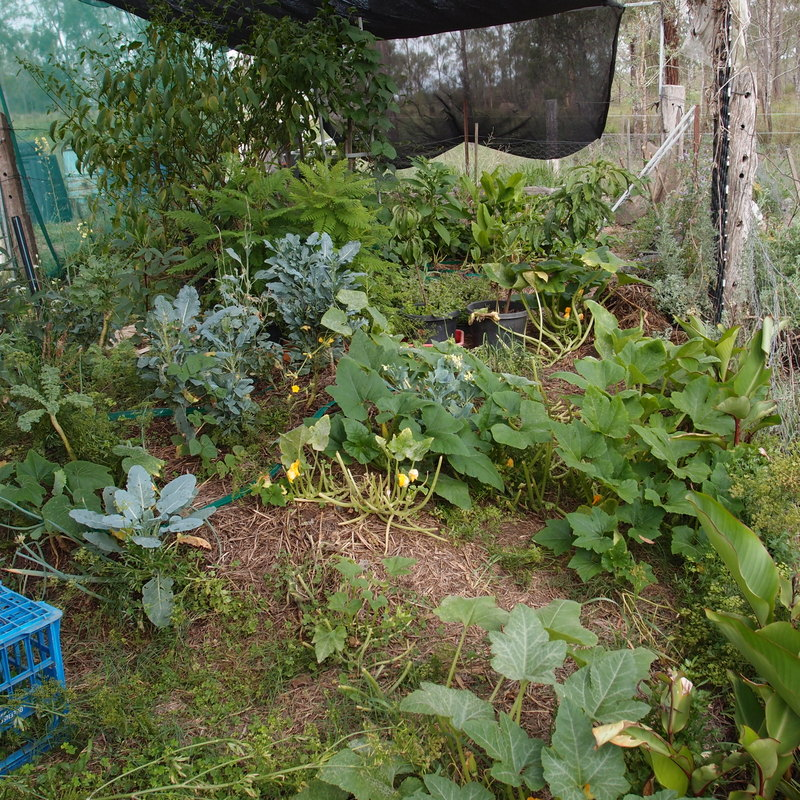 eight acres: review of The Postage Stamp Vegetable Garden