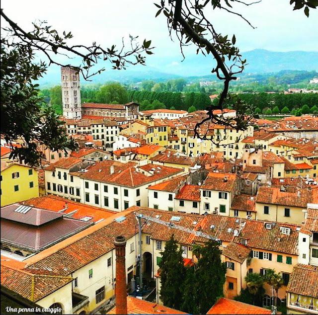 La torre guinigi di Lucca
