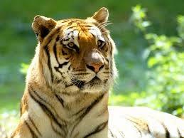 Animal Photo, Wild Animal Photo, Nice Animal Pic, Pet Animal Photo, Animal Pic, Animal Gallery, Beautiful Wild Anima