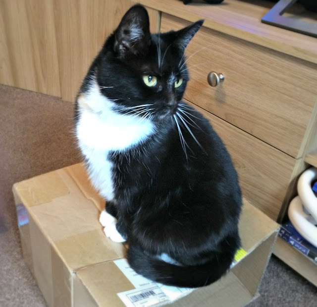 black and white cat on a box