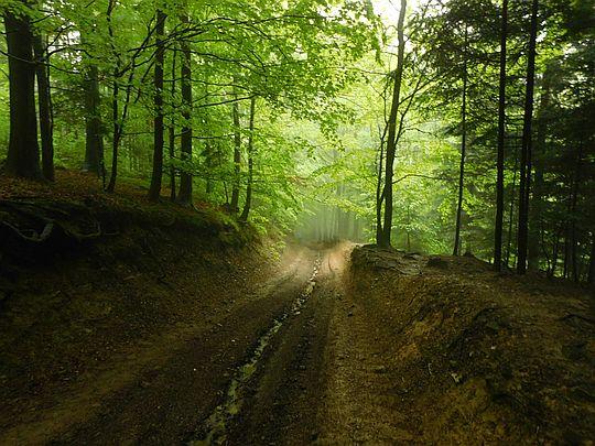 Zagłębiamy się w lesie.