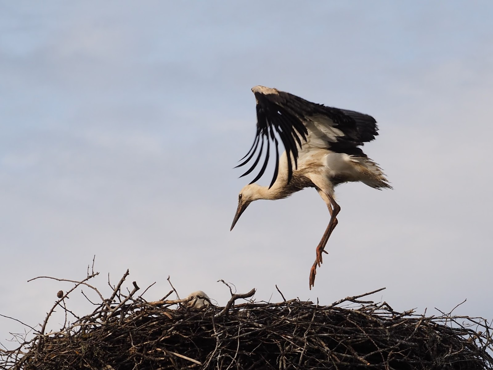 Around the World in 8000 days: Ligatne, Latvia - Storks, Spoons and ...