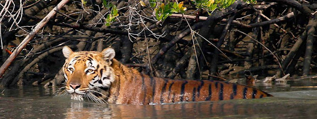 Sunderbans Wildlife Sanctuary, Sundarbans National Park