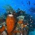 Taman Nasional Teluk Cendrawasih - Papua Barat