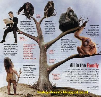 Teori-teori Evolusi Sebelum Carles Darwin
