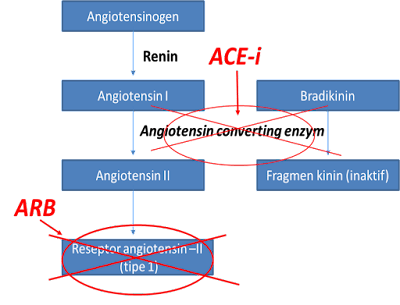 Perbedaan ARB dan ACE-i