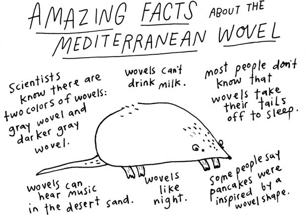 Amazing Facts about the Mediterranean Wovel
