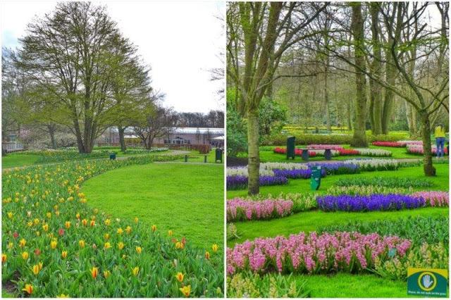 Cuadros de flores en el parque floral Keukenhof