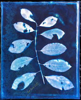 Wet cyanotype_Sue Reno_Image 200