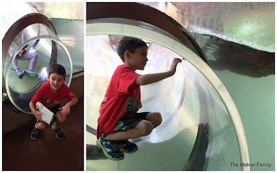 Jackson sliding through a clear slide with an otter swimming over him.