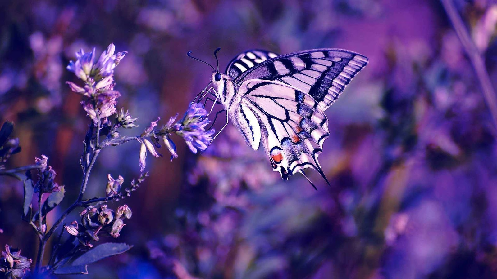 butterfly hq wallpaper 1024x768 - photo #21