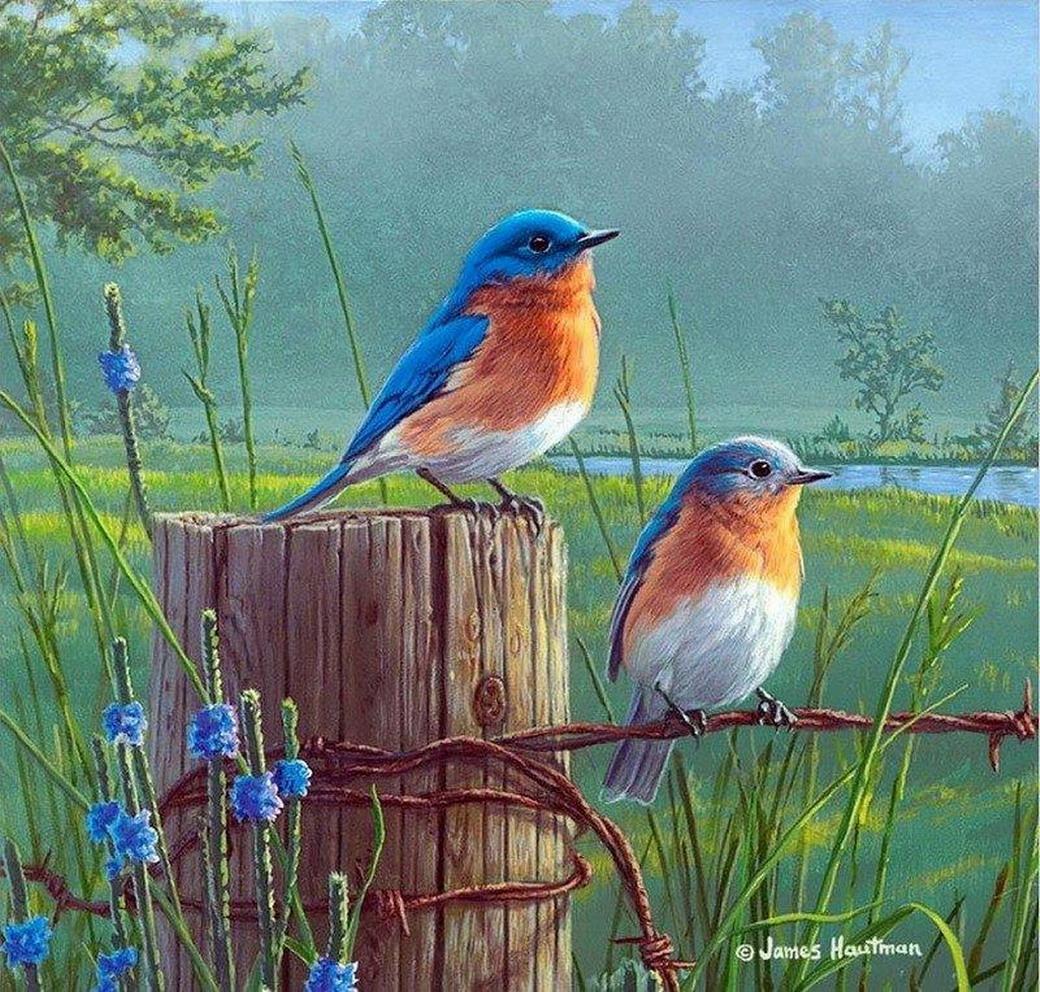 bonitas y coloridas aves silvestres en cuadros