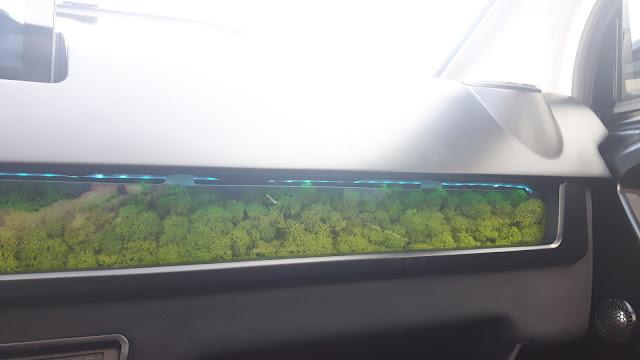 Luftfilter durch Moos reduziert Feinstaub im Auto