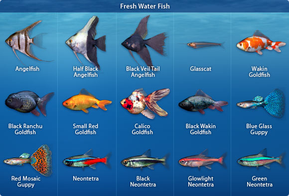 Aquarium Fish Types Names