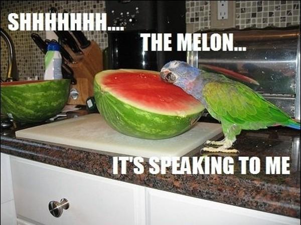 funny-animal-captions-002-008.jpg