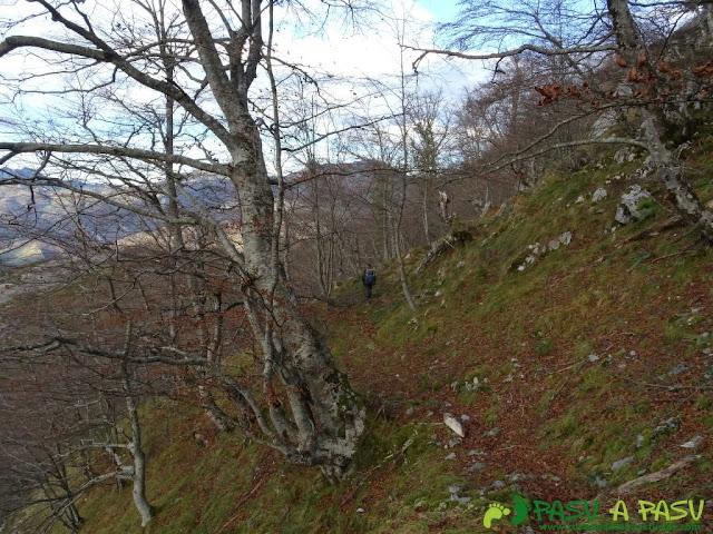 Ruta a Peña Melera y Los Pandos: Atravesando bosque en la cara norte de los Pandos