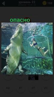 девушка под водой в клетке и рядом большой крокодил