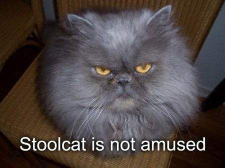 StoolCat is Not  Amused, funny cat meme, funny cat, cat meme