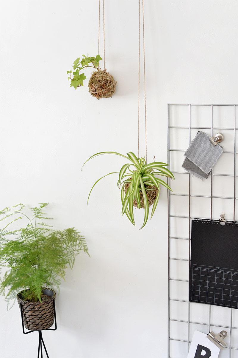 DIY kokedama indoor garden @burkatron