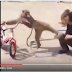 "LMAO - Checkout This Monkey ""Resistance Karate"" After Stealing From A Man"