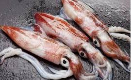 ikan cumi untuk ibu hamil