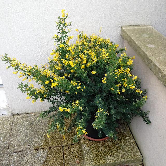 deco outdoor fleurs du printemps