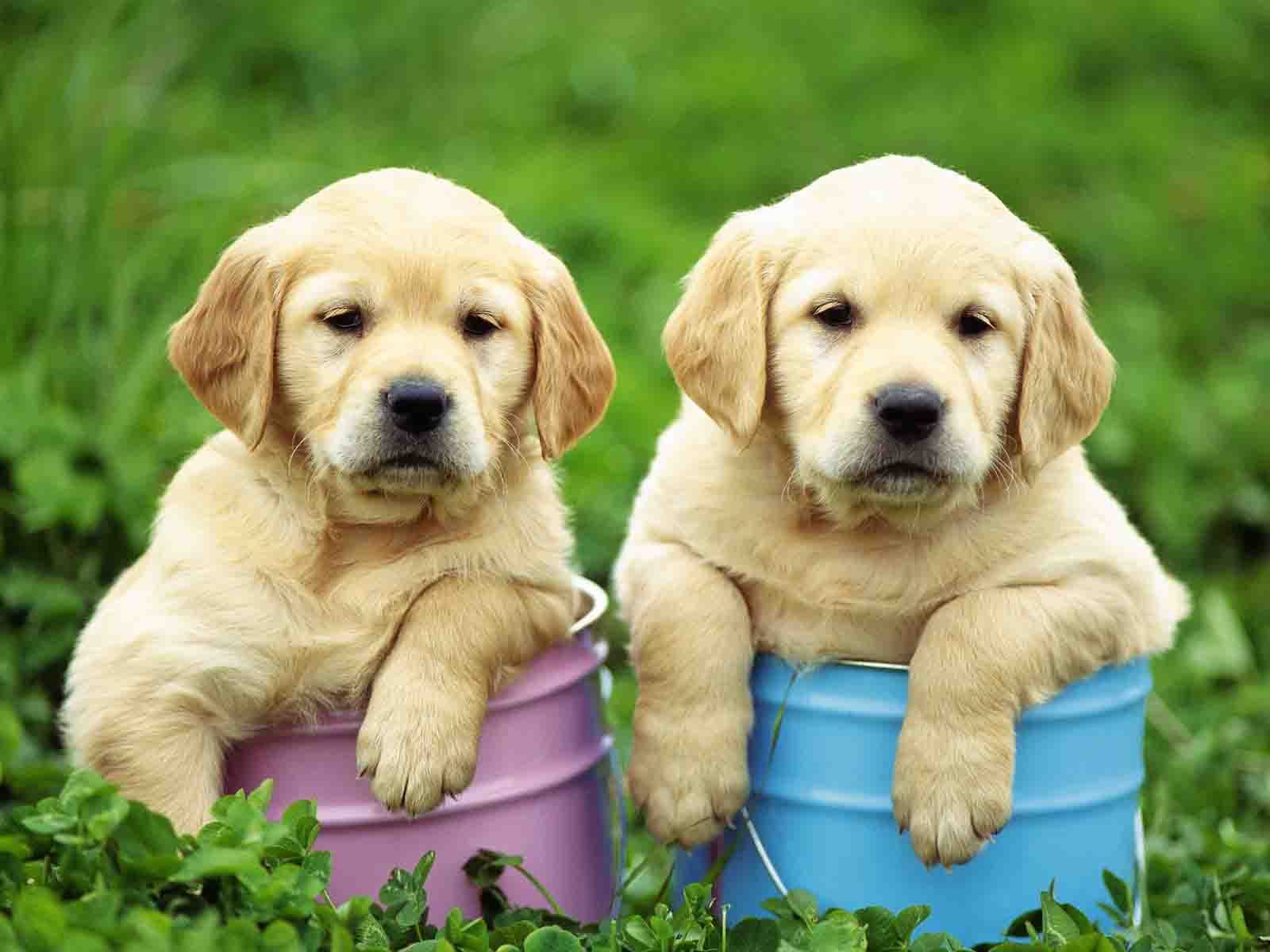 HD WALLPAPERS: CUTE PUPPY HD WALLPAPERS