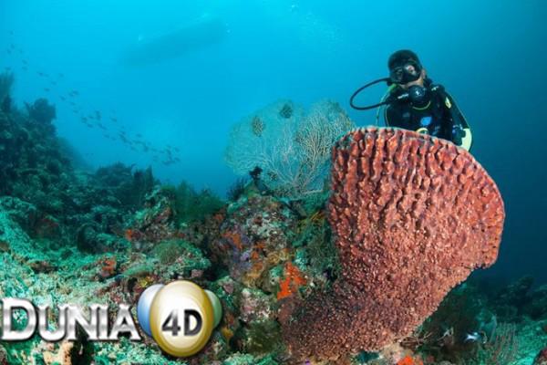 5 Tempat Snorkeling Terbaik di Indonesia, Pemandangannya Menakjubkan