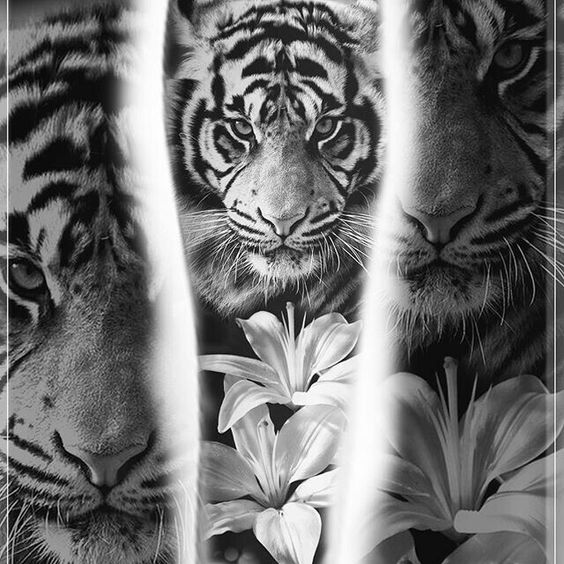 tiger-tattoos-for-girls-9 15 Most Amazing Tiger Tattoos For Women tattoo