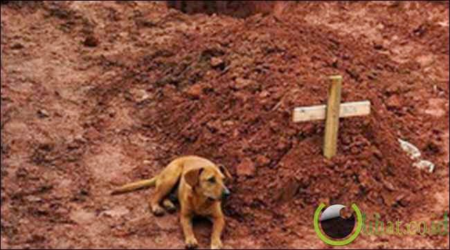 Persahabatan Manusia dan Anjing