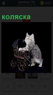 Кошка на задних лапах везет детскую пустую коляску, держась лапами за края и смотря вперед
