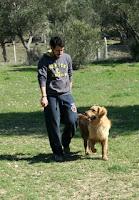 Yoğun programda köpeğiniz 120 saat profesyoneller tarafından eğitilirken, izlenen yöntemleri teorik ve pratik anlayacağınız ve uygulayacağınız şekilde siz de 6 saat özel ders alırsınız.