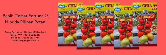 benih tomat fortuna 23,tomat fortuna 23,budidaya tomat,benih tomat,tanaman tomat,lmga agro