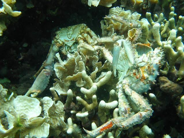 The ocean is losing its breath