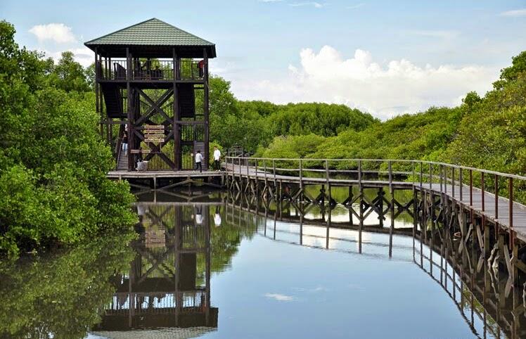 objek wisata hutan mangrove bali