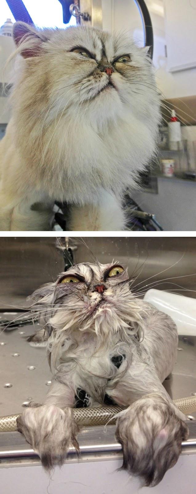 banyo_yapan_hayvanlar1