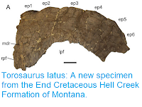 http://sciencythoughts.blogspot.co.uk/2016/03/torosaurus-latus-new-specimen-from-end.html