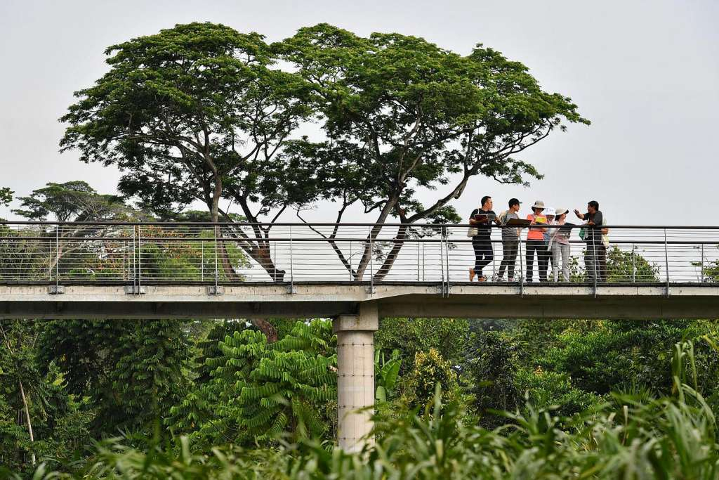 An elevated walkway at the Keppel Discovery Wetlands.