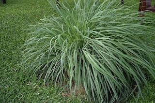 какие травы подходят для обережного букета,