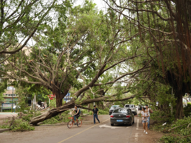 people walking, driving, and riding their bike under a fallen tree across a road in Zhuhai